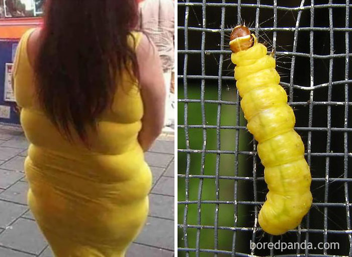 This Lady Or A Caterpillar?