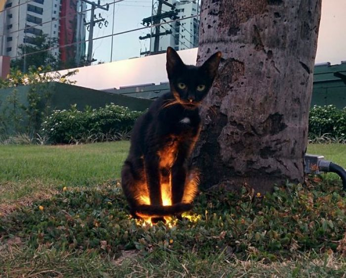 58d0d578a7626 kMZIT9dr  605 - 30+ Photos That Prove Cats Are Actually Demons