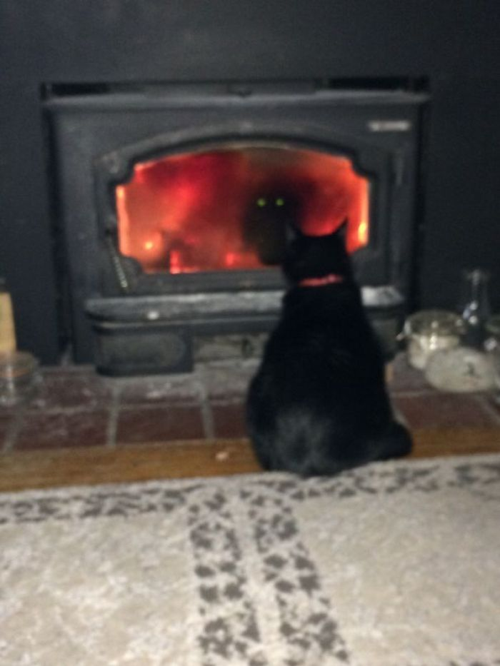 58d0d59f1c265 GAhIaaI  605 - 30+ Photos That Prove Cats Are Actually Demons