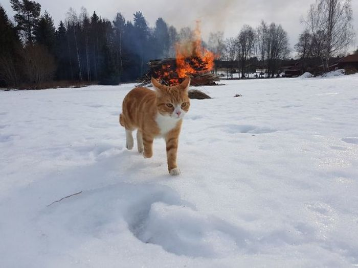 58d0d5d7bd20a 6q2wh951e6my  605 - 30+ Photos That Prove Cats Are Actually Demons