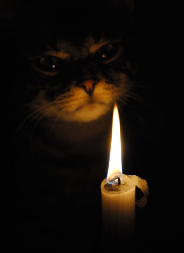 Evil Cats Demons Summoning Satan 104 58d0d842cfc09  605 - 30+ Photos That Prove Cats Are Actually Demons