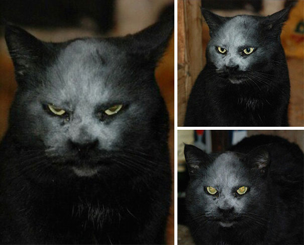 Evil Cats Demons Summoning Satan 121 58d0fd494e643  605 - 30+ Photos That Prove Cats Are Actually Demons