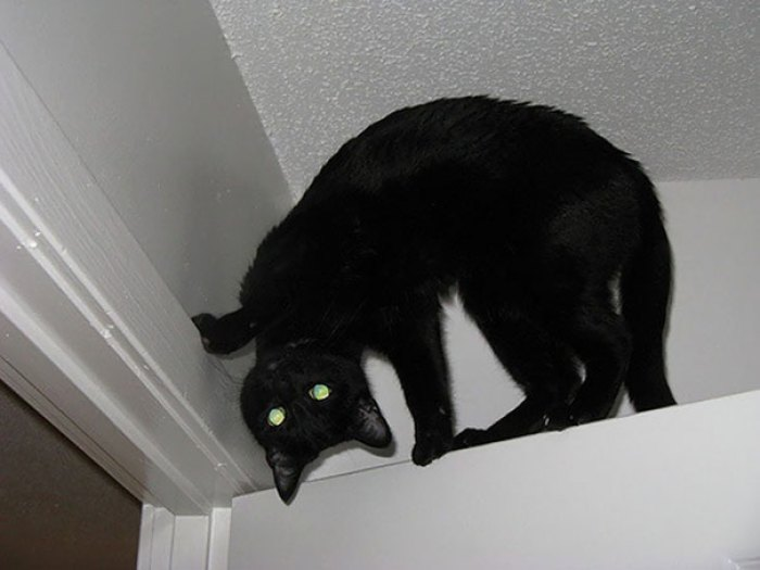 Evil Cats Demons Summoning Satan 125 58d223c94bf80  605 - 30+ Photos That Prove Cats Are Actually Demons