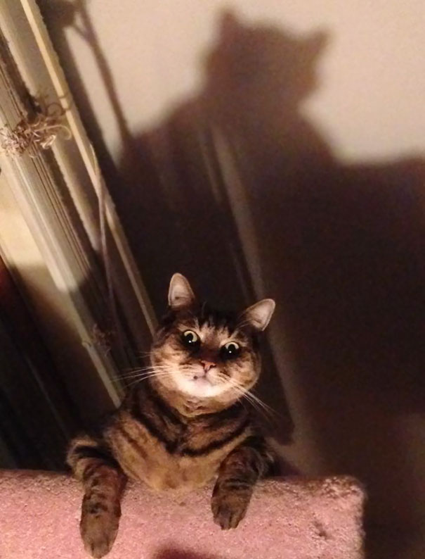 Evil Cats Demons Summoning Satan 146 58d2547bb0dd4  605 - 30+ Photos That Prove Cats Are Actually Demons