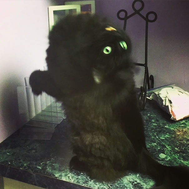 Evil Cats Demons Summoning Satan 154 58d2774ef01cb  605 - 30+ Photos That Prove Cats Are Actually Demons