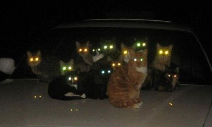 evil cats demons summoning satan 24 58d2695988533  605 - 30+ Photos That Prove Cats Are Actually Demons