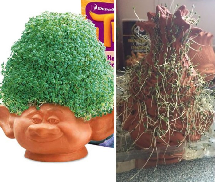 Chia Pet: Expectation Vs. Reality