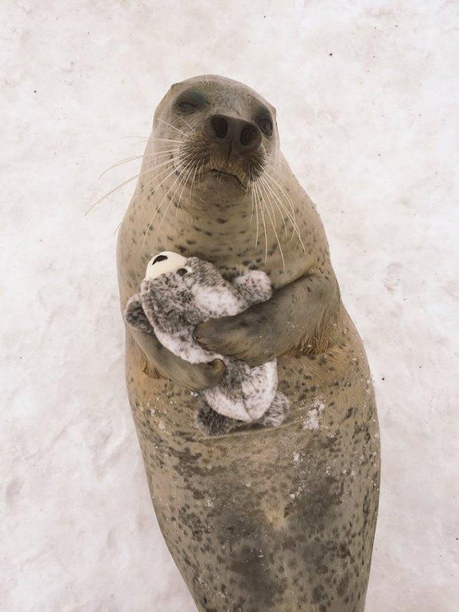 seal-cuddles-plush-toy-1