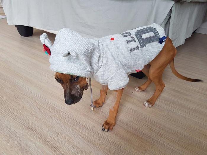 boy-walks-miles-help-dying-parvo-virus-dog-nanuk-3