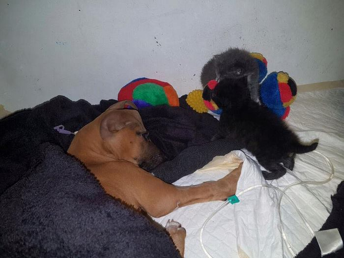 boy-walks-miles-help-dying-parvo-virus-dog-nanuk-5