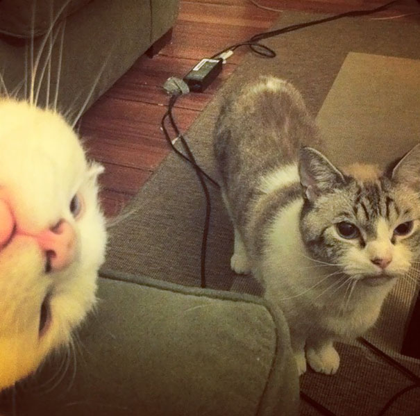 Funny Cat Photobombs