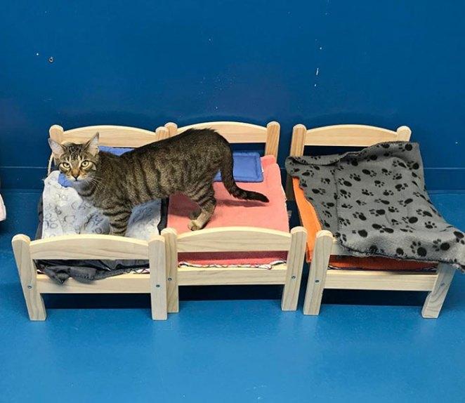 ikea-donates-doll-beds-shelter-cats-1