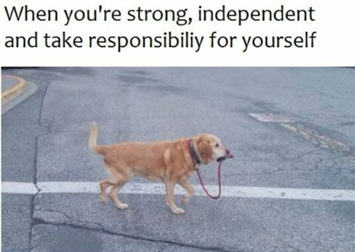 10 Of The Happiest Animal Memes To Start The Week With A