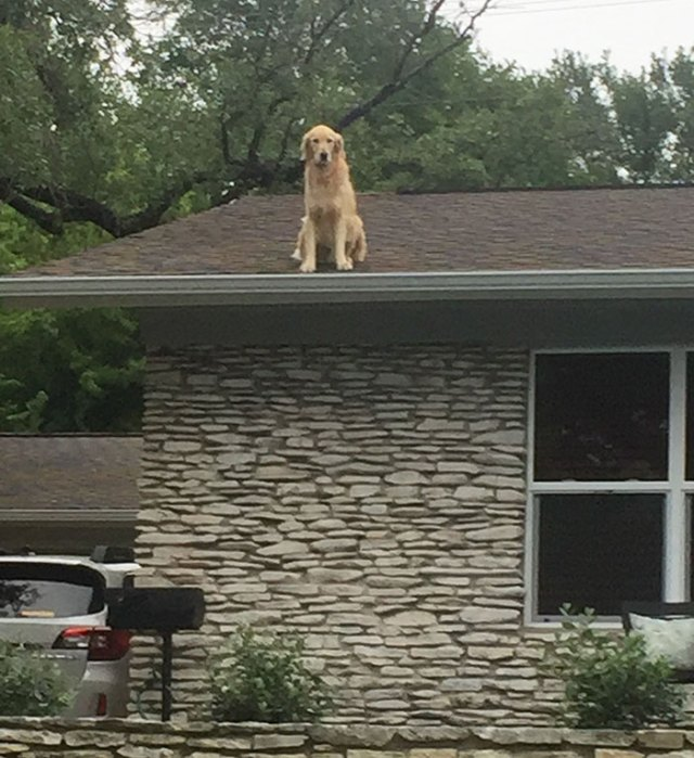 dog-on-rooftop-note-huck-1