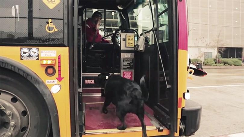 Fotos, Curiosidades, Comunicação, Jornalismo, Marketing, Propaganda, Mídia Interessante dog-rides-bus-seattle-eclipse-11-5948c8aa82ba8__700 Cachorro pega todos os dias ônibus para ir ao parque Cotidiano Curiosidades  cachorro pega onibus