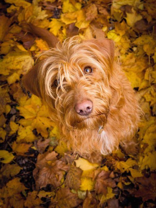 Dog Portrait 3rd Place Winner, Noel Bennett, UK