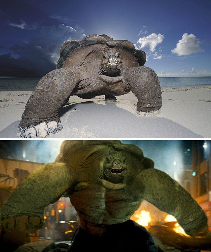 Turtlehulk