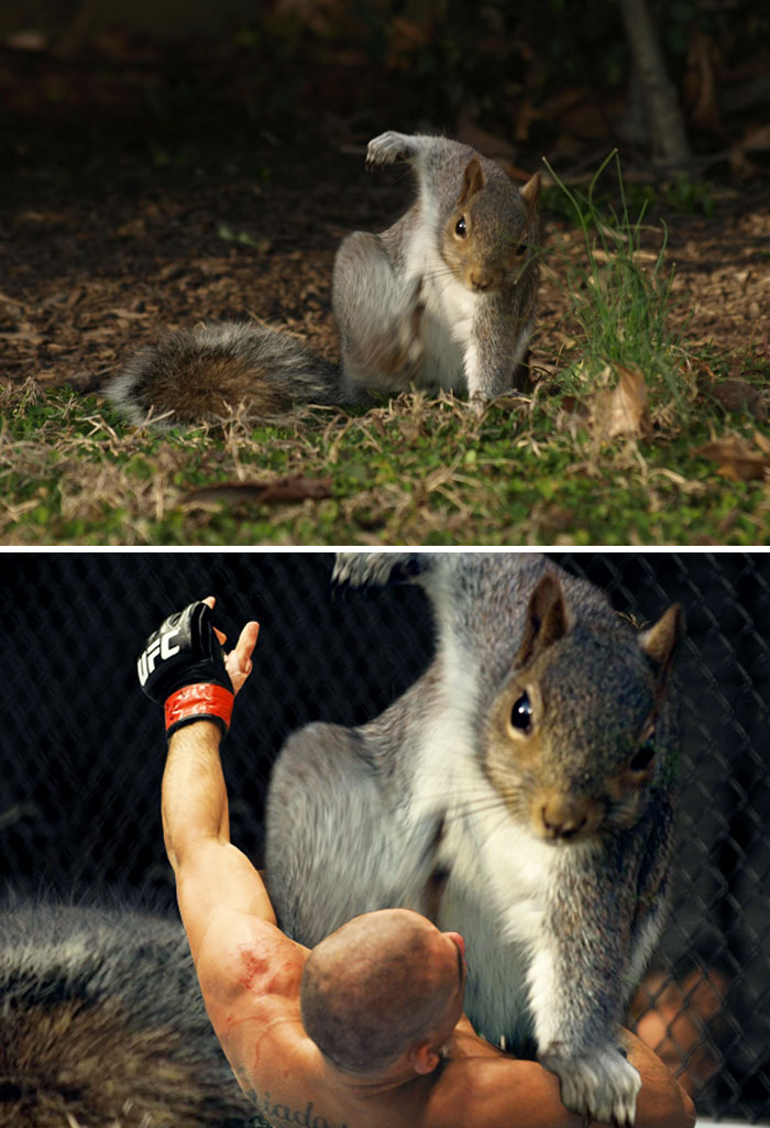 This Squirrel Doing A Super Hero Pose