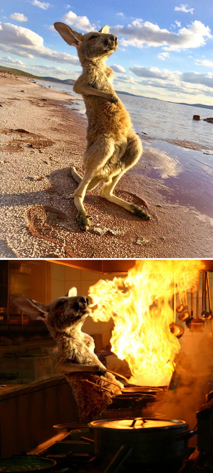 This Kangaroo Feeling The Outback Aussie Sunshine