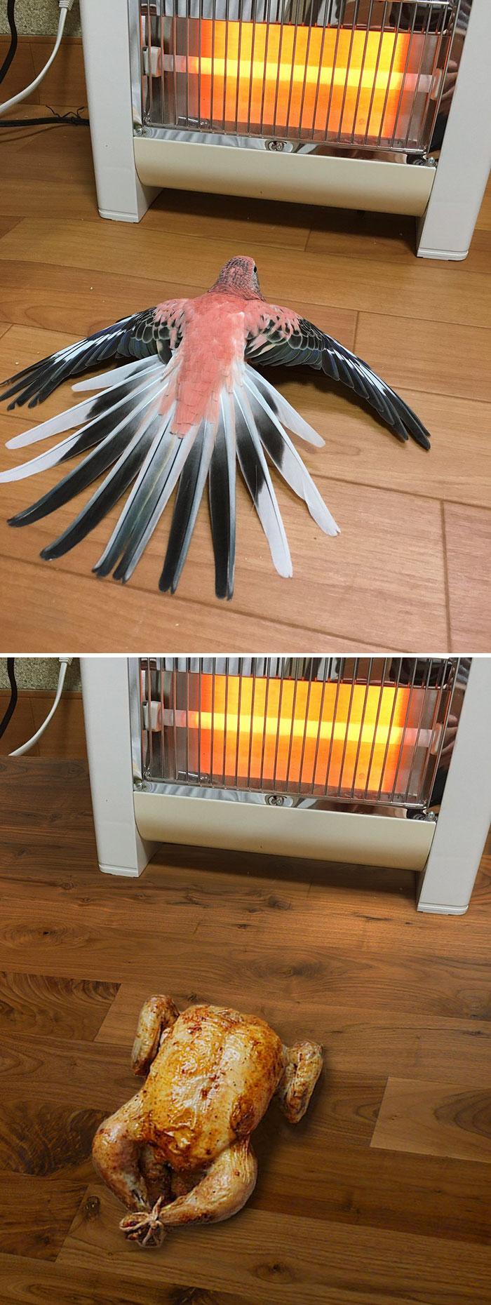 Bird By A Space Heater