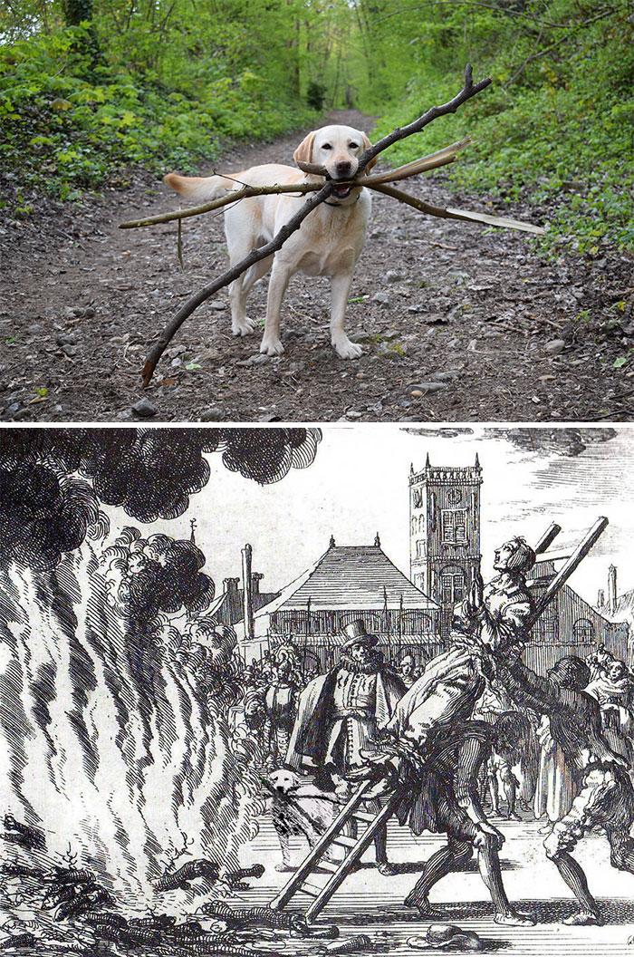 This Dog With Three Sticks