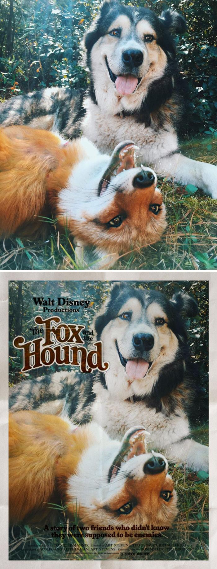 A Fox And A Hound