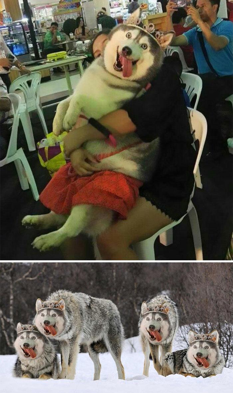 Happy Dog Wearing A Tiara