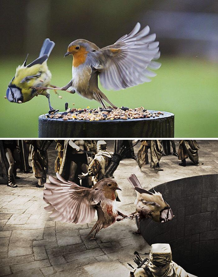 Bird Kicking Bird