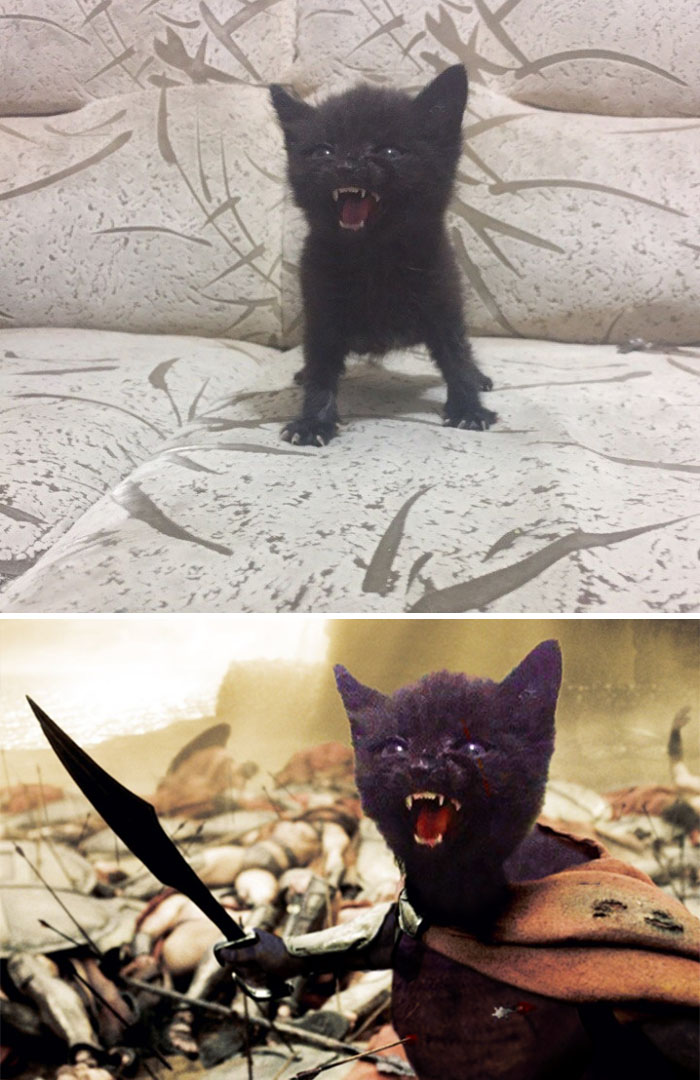 An Angry Kitty