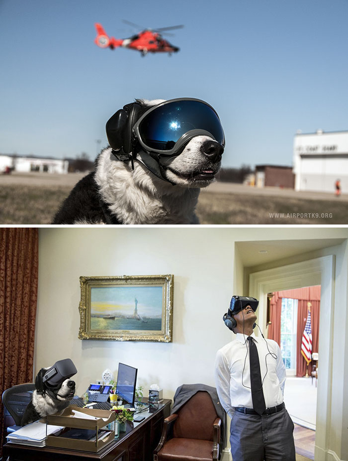 Airport Security Dog With Ski Goggles And Ear Protection