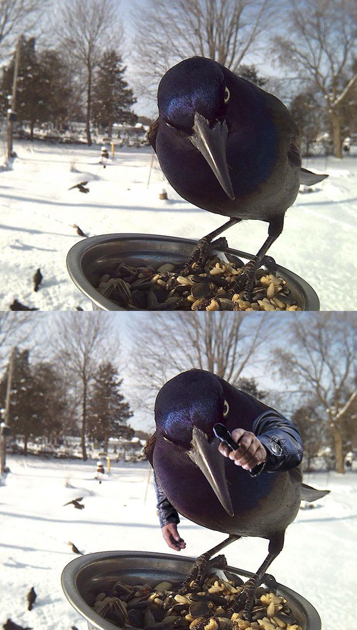 Jackdaw On A Bird Feeder