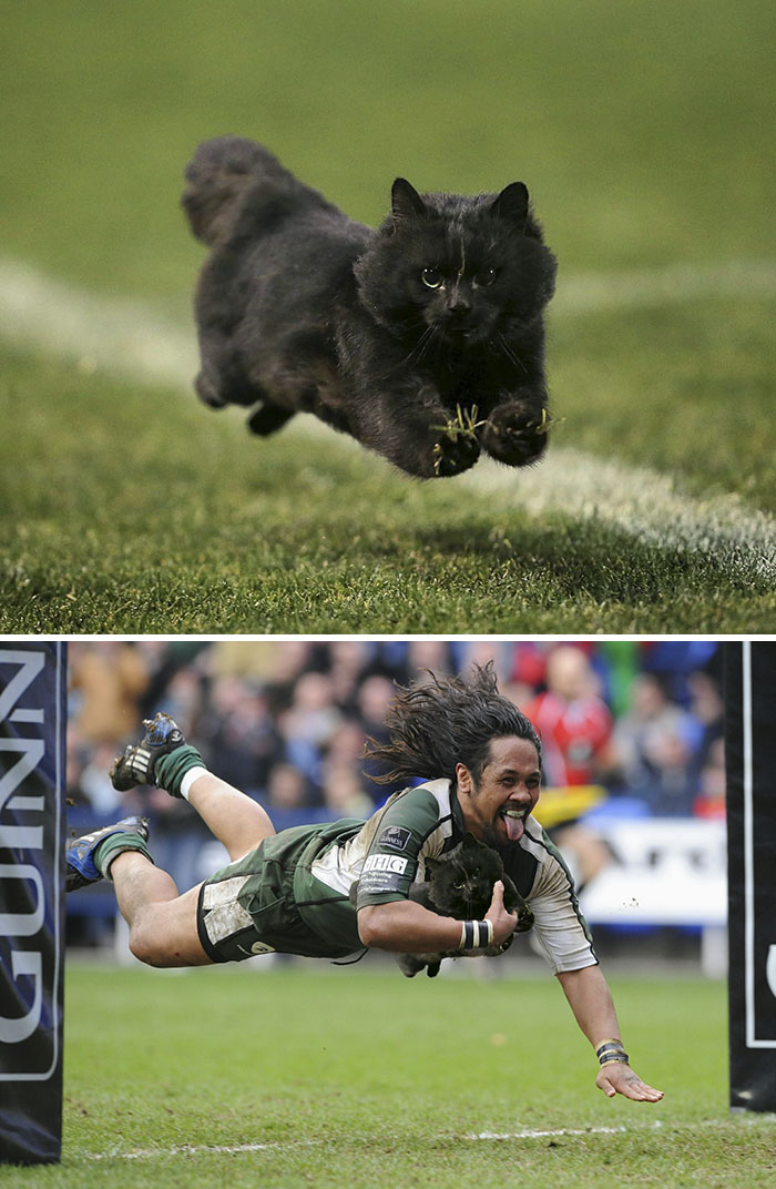 Cat Runs Onto The Field During Rugby Match