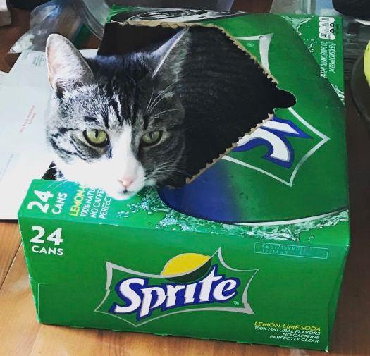 Catfiene Free 😊