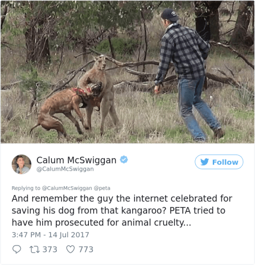 guy-sums-up-peta-twitter-calum-mcwiggan (6)