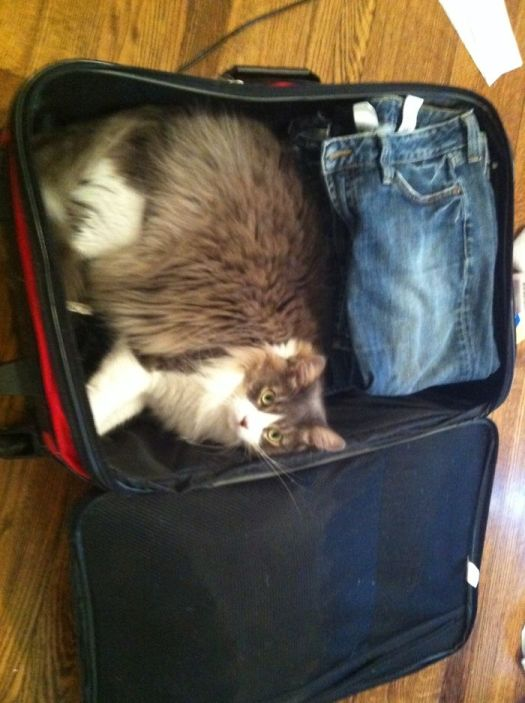 If I Fit, Can I Come With?