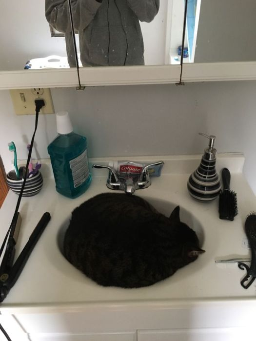 Stryker Loves To Sleep In Our Sink