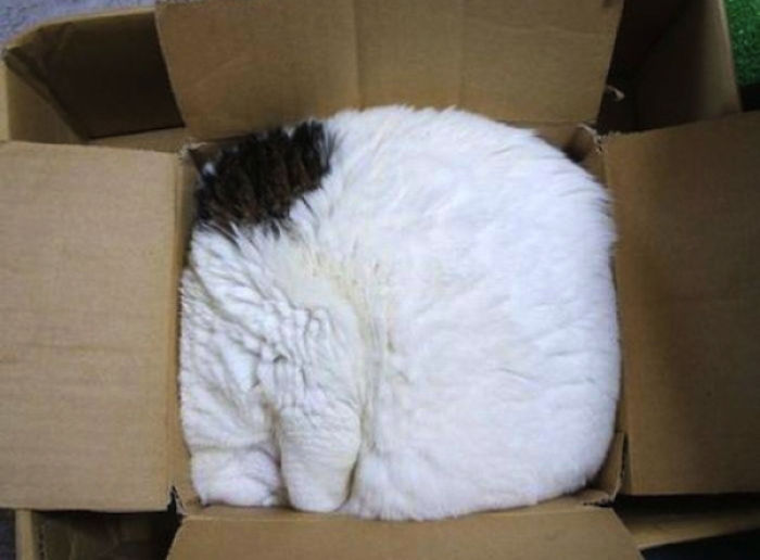 "5981b21a673bd zZh4i  700 - 15 photos that proves cat's life motto: ""if it fits, i sits"""