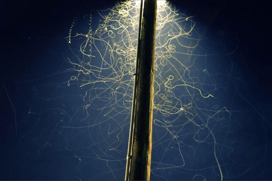 Long Exposure Of Bugs Under A Streetlamp