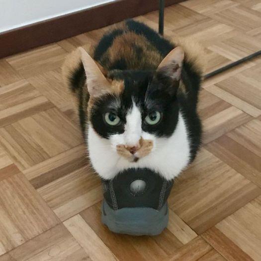 Shoe? What Shoe?