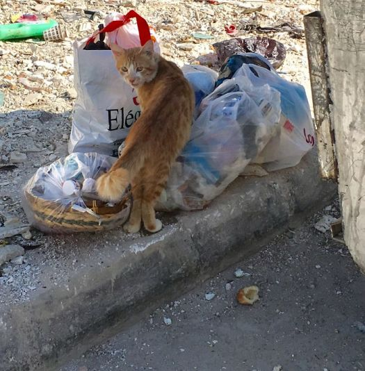 On Garbage!!! Well This Cat Does Not Seem To Mind Ut!!