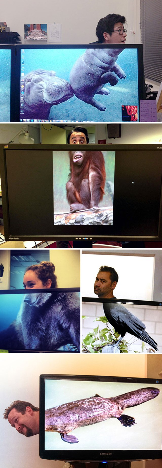Office Safari. That's A Thing