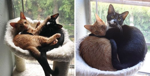 Adopted Cat Brothers Continue Sleeping Together Even After They Outgrow Their Bed