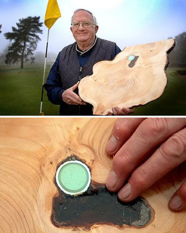 Golf Ball Lost Years Ago Found Embedded In Tree Trunk