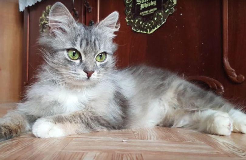 man rescues freezing kitten slava nika cat pusic 18 59886c4f56e50 png  700 - A historia do homem e o gatinho congelado na Russia