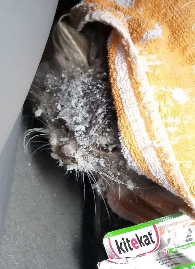 man rescues freezing kitten slava nika cat pusic 3 59886c2613e28  700 - A historia do homem e o gatinho congelado na Russia