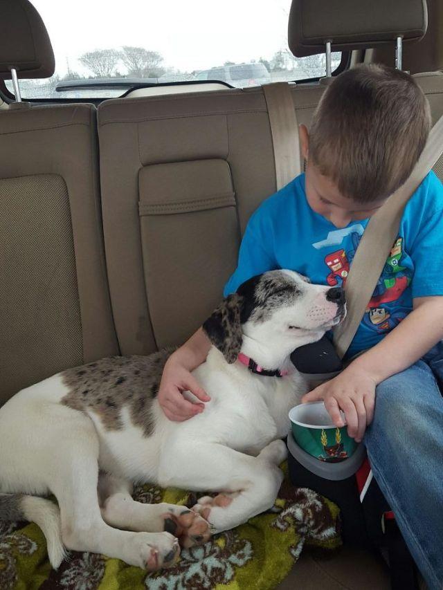 Meet Luna, Our Shelter Rescue