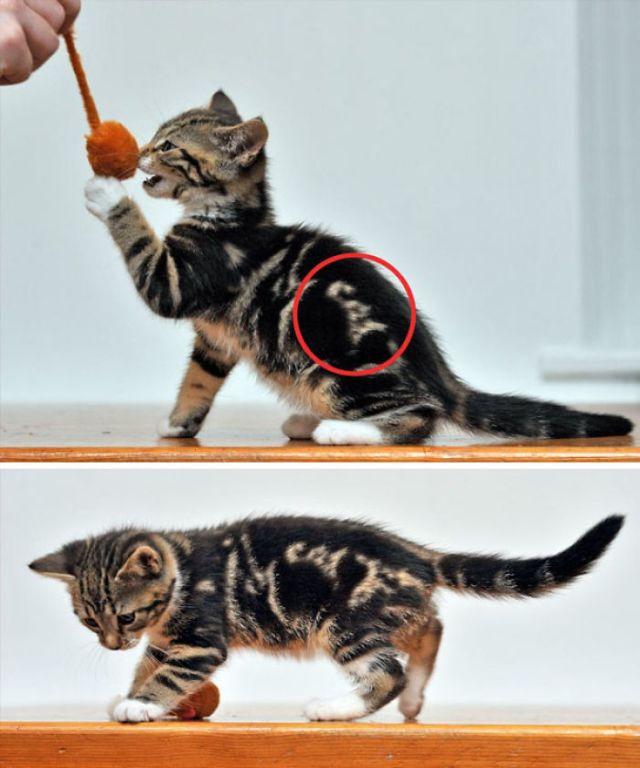 Kitten With 'Cat' Written In Its Fur