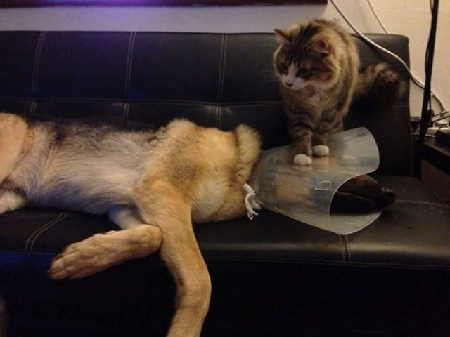 Having A Cone Collar Fitted At The Vet Was Bad Enough, Then My Dog Had To Come Home To The Cat
