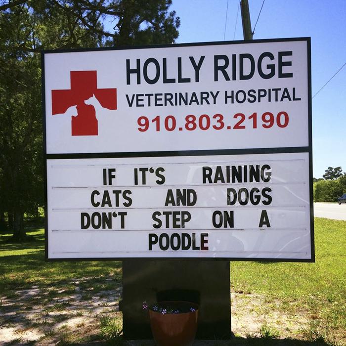 Funny-veterinarian-signs