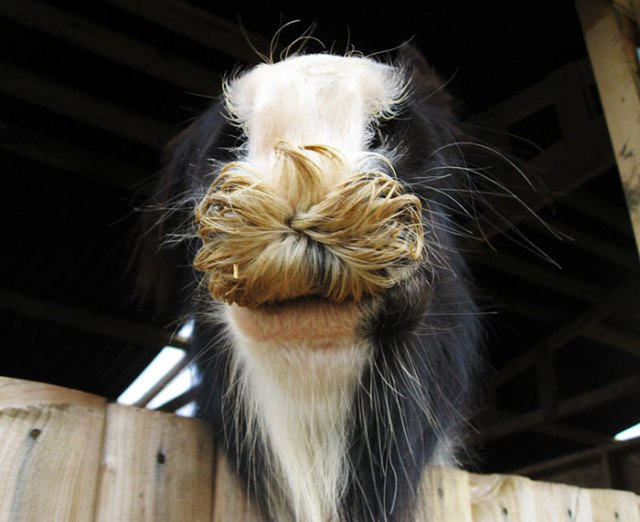 If You Ever Feel Sad, Just Remember That Horses Can Grow Moustaches